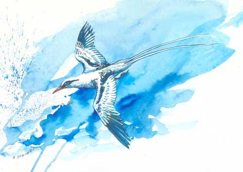 Gilly Gobinet's Tropic Bird