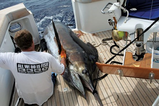 Big Rock Blue Marlin Tournament - Todd Baxley and his winning blue marlin both take a break after a two-hour battle.