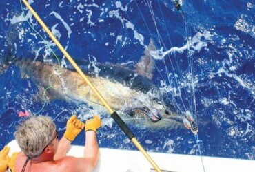 The South Carolina Governor's Cup Billfishing Series - Carroll Campbell III prepares to wire a blue marlin at the boat. Photo by Middleton Rutledge