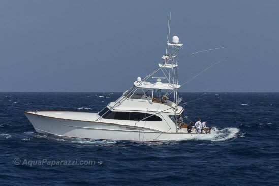 Pescador backing down on one of four blue marlin released in the first day of the 50th July Open Billfish Tournament.