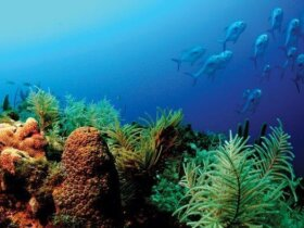 A shallow-water coral reef in the Florida Keys. Photo courtesy of NOAA