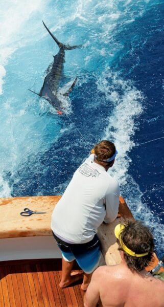 Photo courtesy of Casa De Campo International Blue Marlin Classic