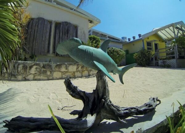 Hammerhead shark outside Johnston Gallery. Photo by Andy Schell