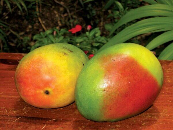 Mangoes. Photography by Dean Barnes