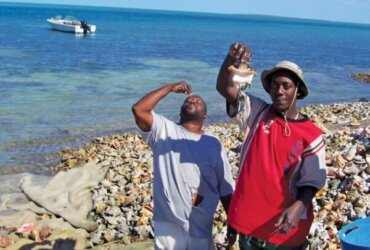 Bahamian men believe the 'pistol' will increase their virility. Photography by Devi Sharp