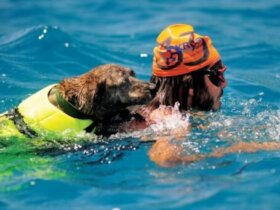 Gilbo Simpson and his dog Biltong compete in the two-mile assisted race. Biltong was the first dog to compete in the swim. Photo by Todd VanSickle