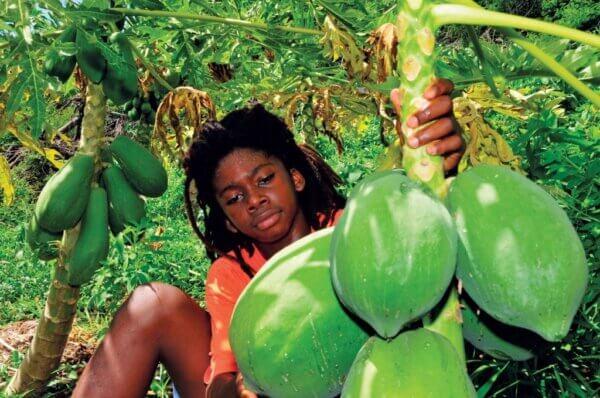 Papaya. Photography by Dean Barnes