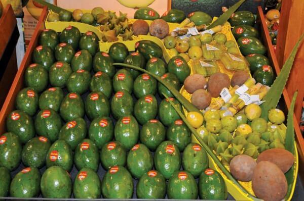 Green Caribbean Avocados. Photography by Dean Barnes