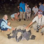 The author and his wife gently touch a leatherback turtle. Photography by Charles Shipley