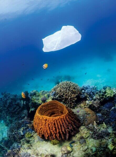 A discarded plastic bag drifts over a coral reef. Photo credit: Richard Whitcombe/Shutterstock.com