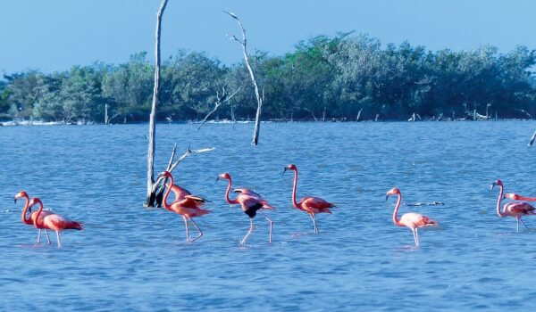 Bahamas - Flamingos in the pink! Photo: Lynn Gape