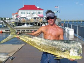 The Carolina Billfish Classic awards a new truck for a S.C. state record dolphin. Photo by Jeff Dennis