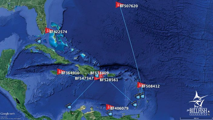 Locations of blue marlin tags (red flag) and recaptures (blue fish) show just how far these magnificent creatures travel throughout the Caribbean. Graphic courtesy of the The Billfish Foundation