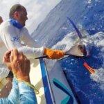 Blue Ocean bring a fish alongside