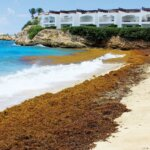 Sargassum rolls ashore on a beach in St. Maarten. Photo: OceanMedia