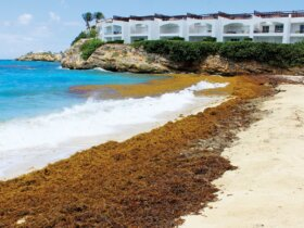 Sargassum rolls ashore on a beach in St. Maarten. Photo: OceanMedia