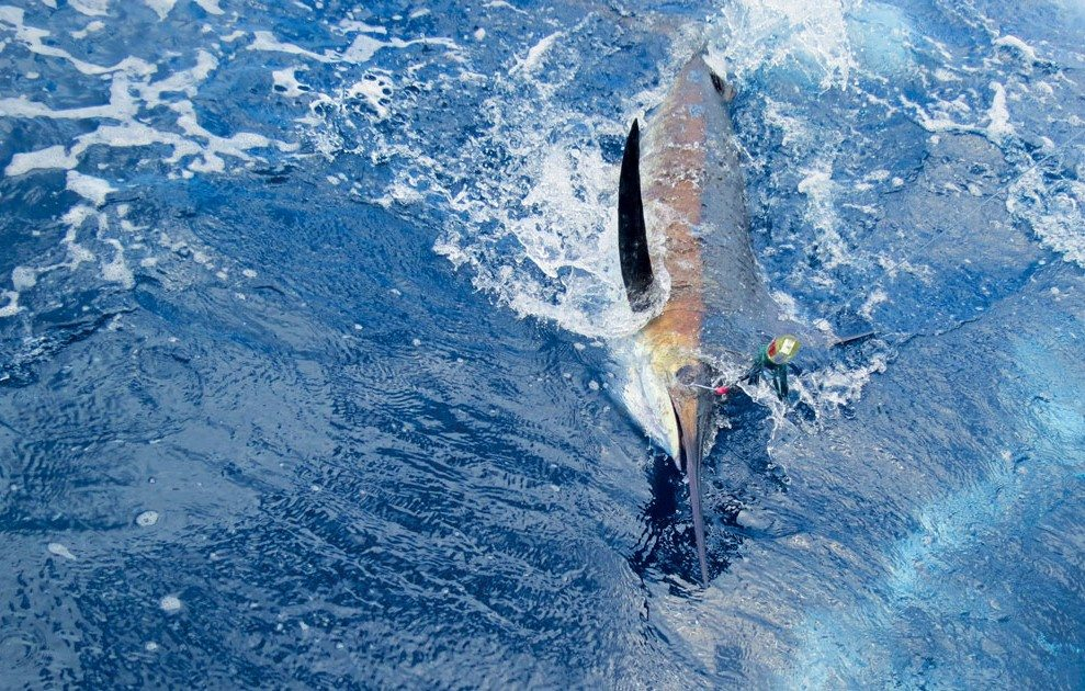 One of the many Marlins released during the tournament