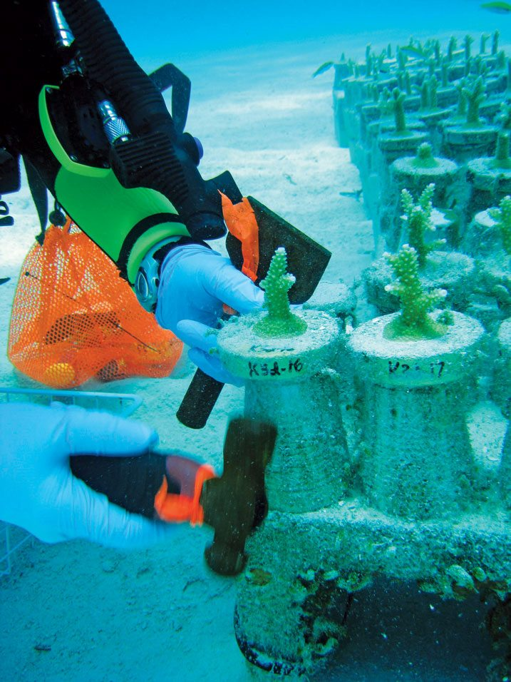 Volunteers assist The Nature Conservancy and NOAA scientists at the National Marine Sanctuary coral nursery with the transplanting of thousands of staghorn coral onto pedestals sitting on concrete blocks on the floor of the ocean. Photo Credit: NOAA National Marine Sanctuary Media Library