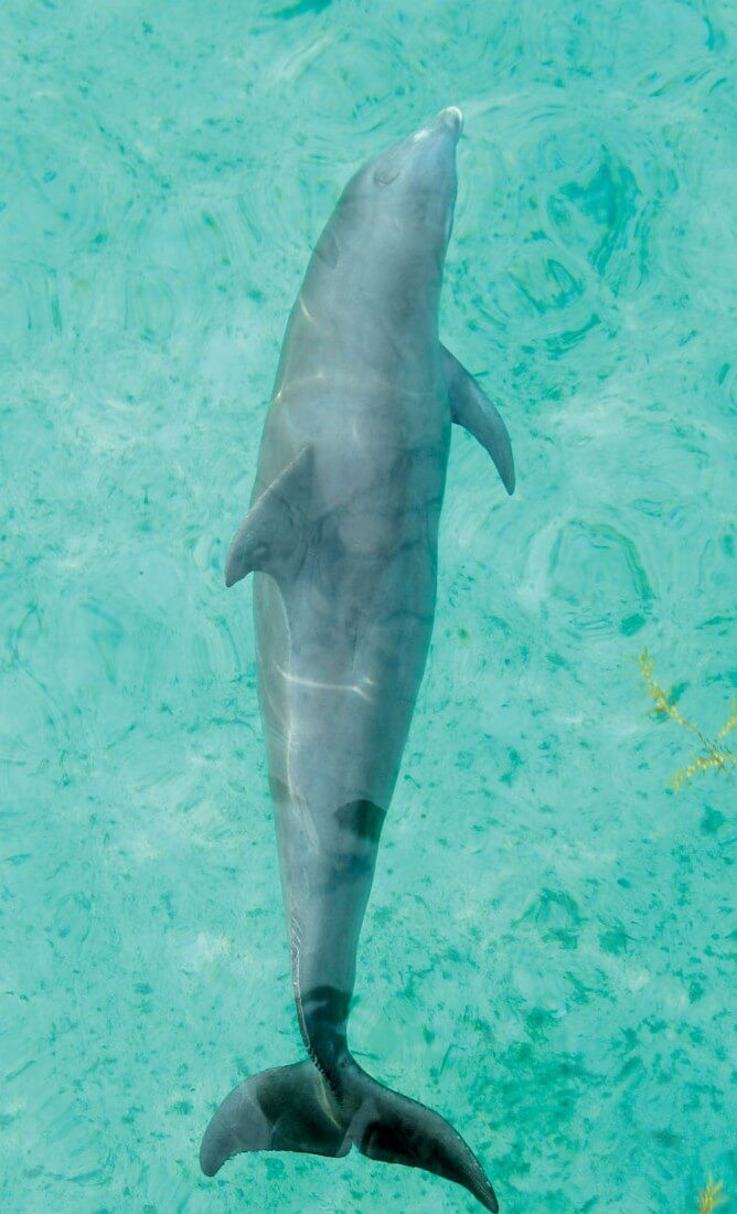 Spectacular Diving in the Turks & Caicos: Dolphin, Photo by Stephanie Wallwork