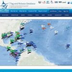 The Billfish Foundation Celebrates 30 Years