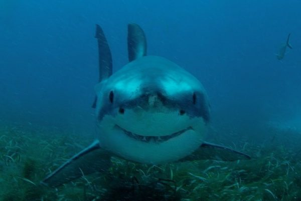New Caribbean shark sanctuaries