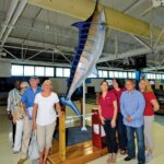 blue marlin display