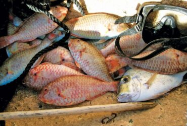 Part of the day's catch in Ivar's boat. Photo by Jan Hein