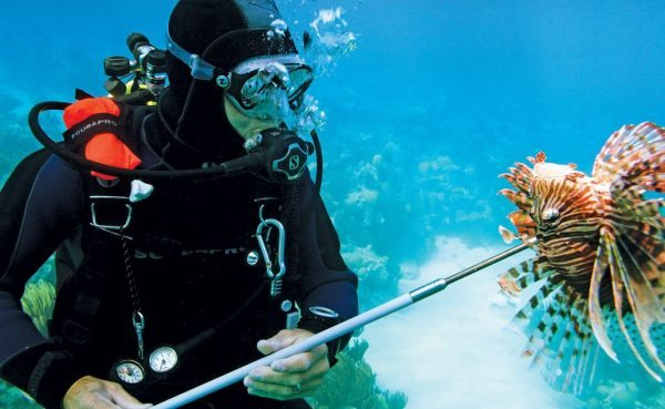 diver-spearing-a-lionfish-off-the-coast-of-bermuda-image-courtesy-of-ocean-support-foundation