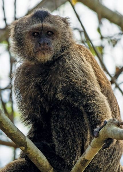 Guyana Monkey All photos by Sharon Matthews-Stevens: www.sherryspix.com