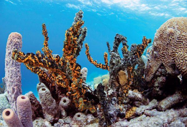 3D Coral Printing