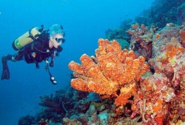 Underwater Photography 101