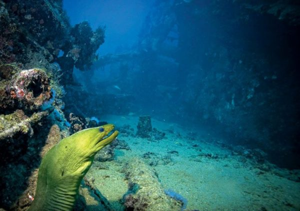 Aruba's Antilla is the largest wreck dive in the Caribbean