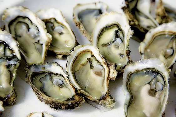 Oysters … but how many worked?