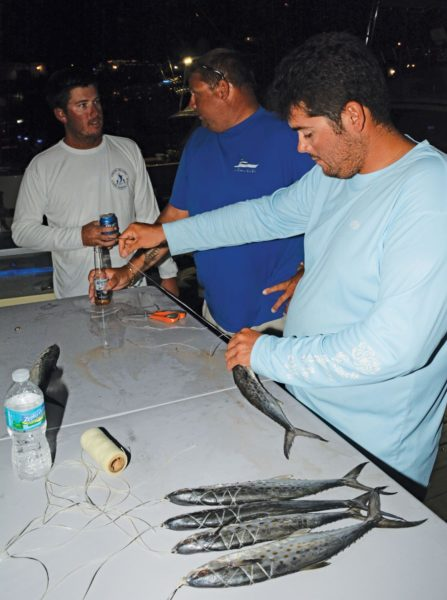 Preparing the baits ready for next day – Mates on sports fishing boats require strong stomachs. Photo: Dean Barnes