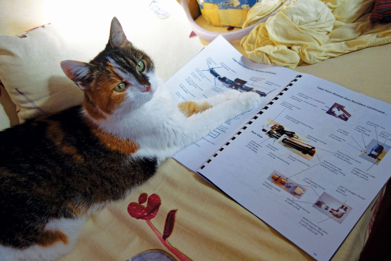Leeloo is supervising the project. Photo by Birgit Hackl