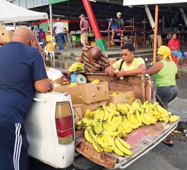 Going bananas. Photo by Lorraine Escher