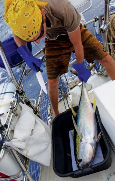 Slaughtering a yellow fin tuna. Photo by Birgit Hackl