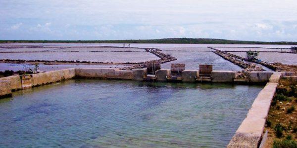 Salt Cay - Salt Gates