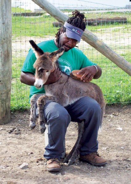 A little TLC at the Antigua Donkey Sanctuary & Animal Shelter