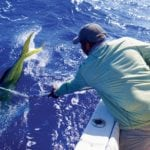 Captain Luis Burgos dipnets a bull dolphin caught by angler Porfilo Serrano to be fitted with a satellite pop-up archival transmitter off San Juan, Puerto Rico. Photo: W. Merten