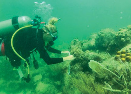 Hanna Koch, Ph.D. of Mote doing underwater research