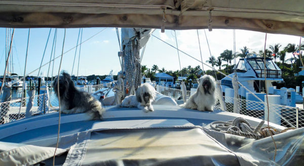 The author's pets on board