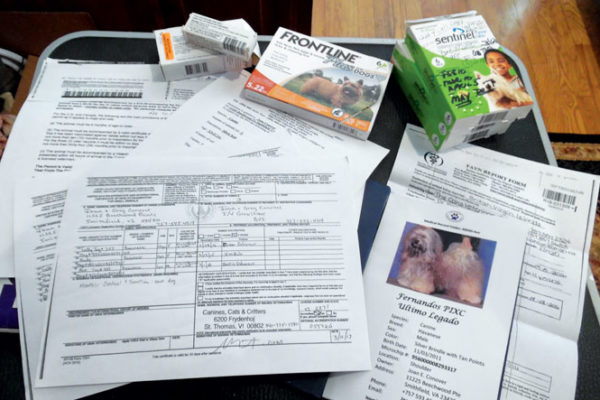 Obtain critical pet medications ahead of time.