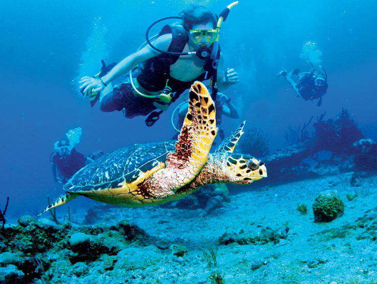 Image Courtesy of Sail Caribbean Divers