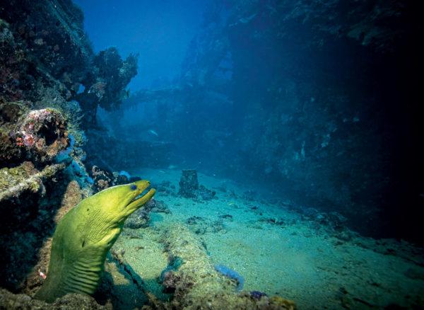 Antilla Shipwreck Dive Site