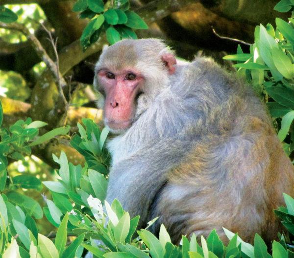 SVI---PR---Santiago--Monkey-Closeup
