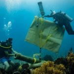 Underwater Living Museum in Dominican Republic