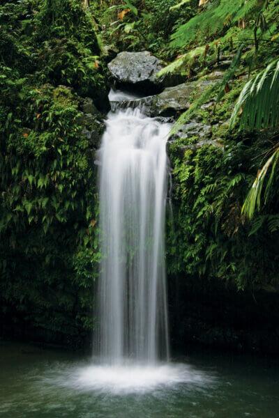 Puerto Rico El-Yunque - Caribbean Tourism Organization