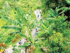 Blue Mountain Bike Jamaica