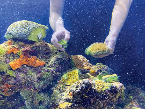 Save Coral Reef - Coral World Ocean Park Display of UVI Corals